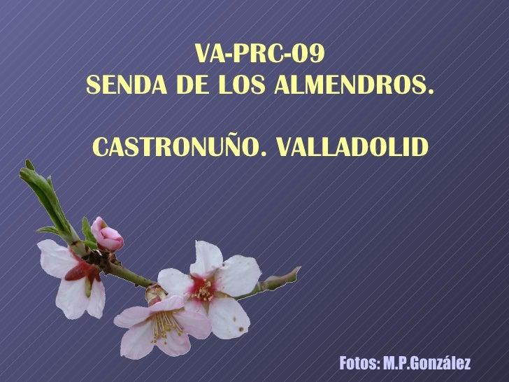Almendros de Castronuño (VA) de M.P.González