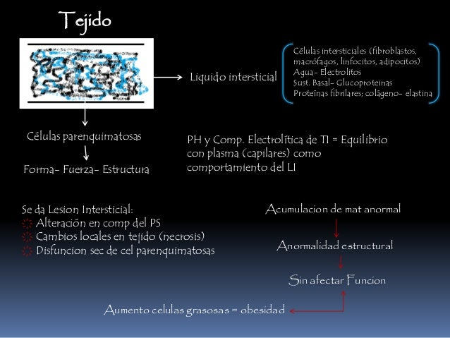 Tejido Liquido intersticial Células parenquimatosas Células intersticiales (fibroblastos, macrófagos, linfocitos, adipocit...
