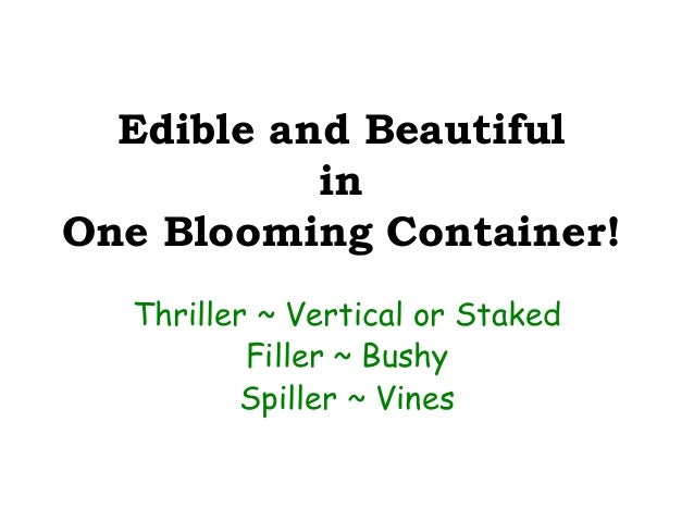 Edible and beautiful containers