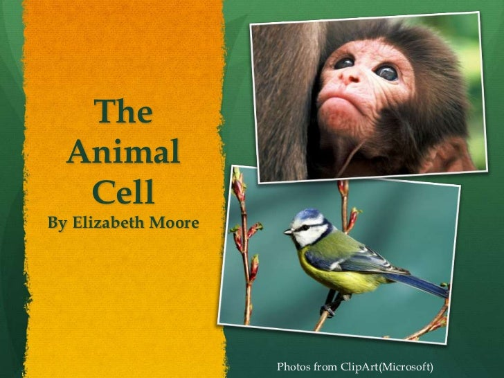 The Animal Cell<br />By Elizabeth Moore<br />Photos from ClipArt(Microsoft)<br />