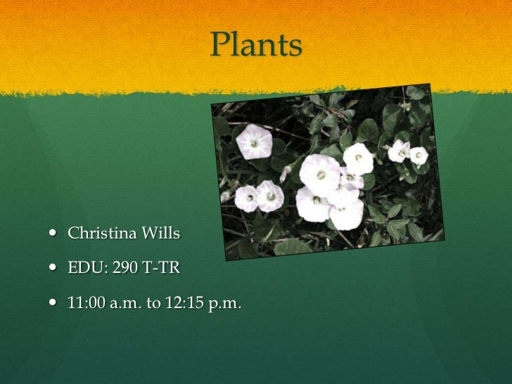 Plants <br />Christina Wills<br />EDU: 290 T-TR<br />11:00 a.m. to 12:15 p.m.<br />