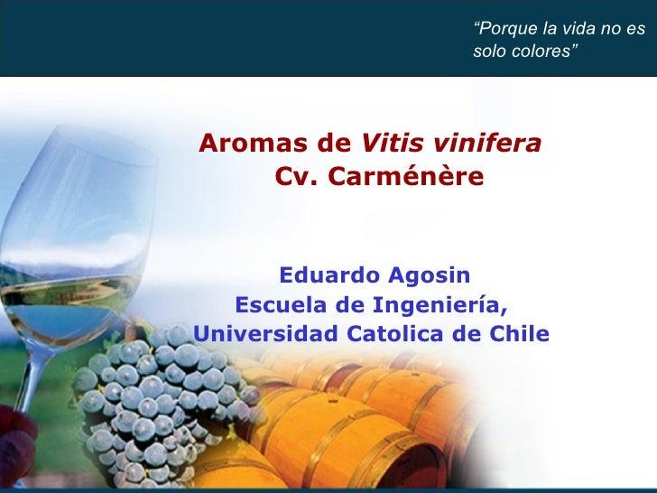 "Aromas de  Vitis vinifera  Cv. Carménère Eduardo Agosin Escuela de Ingeniería,  Universidad Catolica de Chile  "" Porque la..."