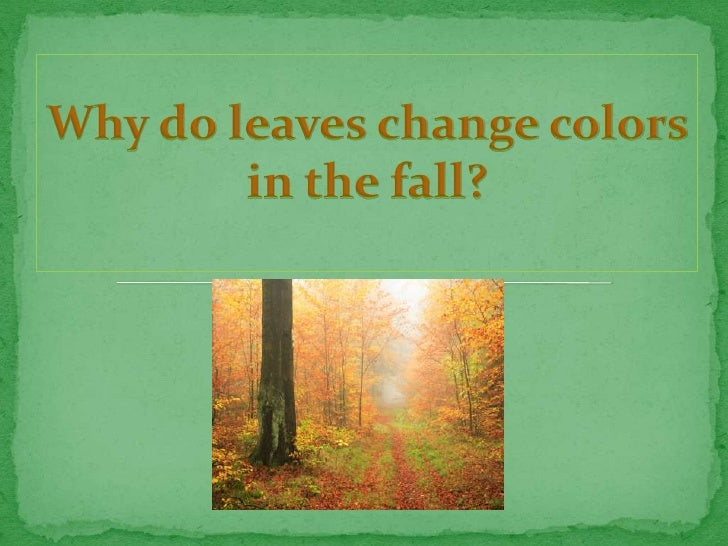 What is the purpose of plants and trees?    What causes the leaves to change colors in the  fall?   Why are there diff...