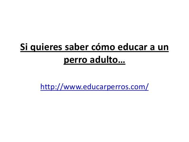 Si quieres saber cómo educar a un          perro adulto…    http://www.educarperros.com/