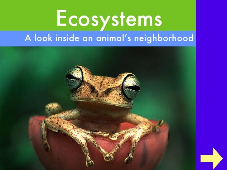 Ecosystems <ul><li>A look inside an animal's neighborhood </li></ul>