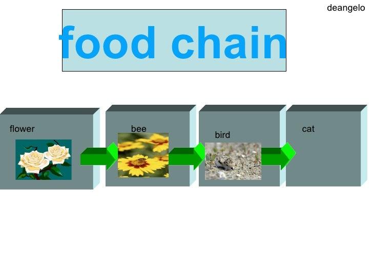 Komodo Dragon Food Chain Diagram Orangutan Food Web Diagram