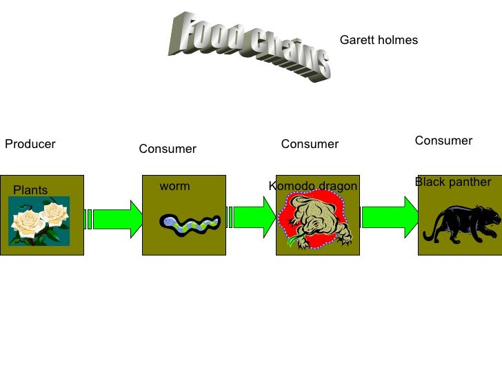 Food Chain Starts With