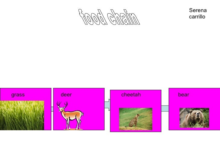 Leopard Food Chain