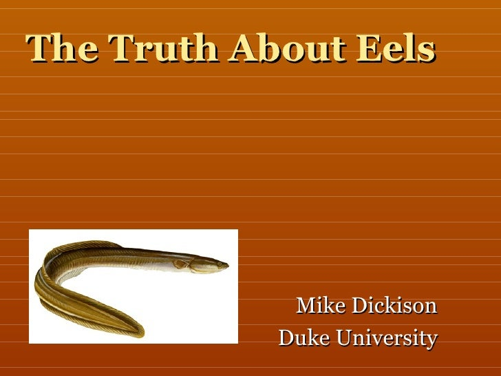 The Truth About Eels Mike Dickison Duke University