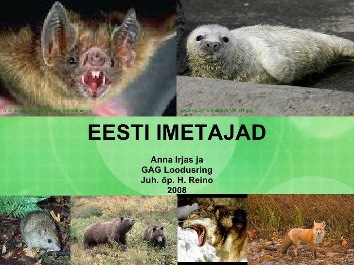 EESTI IMETAJAD Anna Irjas ja GAG Loodusring Juh. õp. H. Reino 2008 reisiblog.lhconcept.ee/images/nahkhiir.jpg   www.etv24....