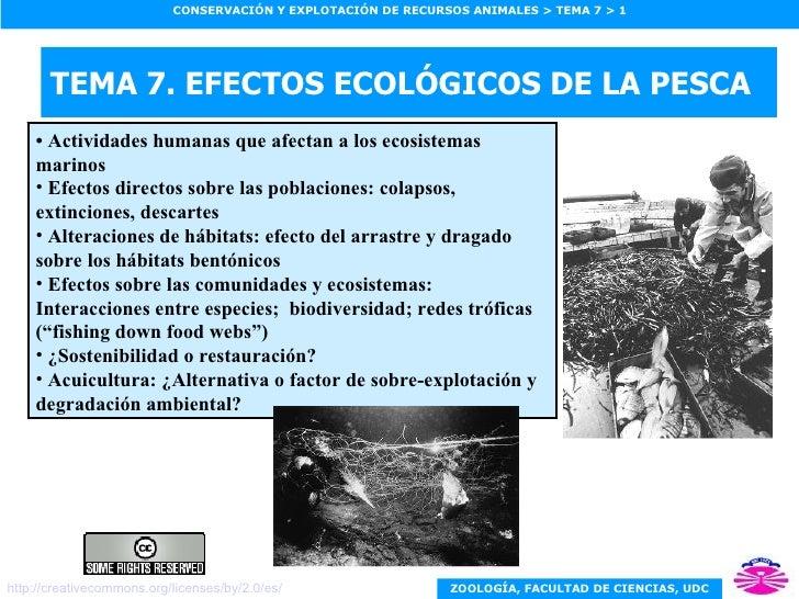 TEMA 7. EFECTOS ECOLÓGICOS DE LA PESCA <ul><li>•  Actividades humanas que afectan a los ecosistemas marinos </li></ul><ul>...
