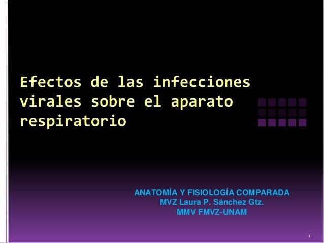 ANATOMÍA Y FISIOLOGÍA COMPARADA     MVZ Laura P. Sánchez Gtz.        MMV FMVZ-UNAM                                  1