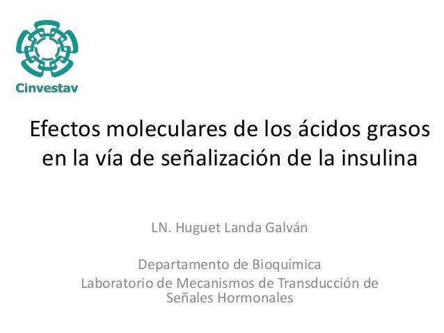 Efectos moleculares de los ácidos grasos  en la vía de señalización de la insulina  LN. Huguet Landa Galván  Departamento ...