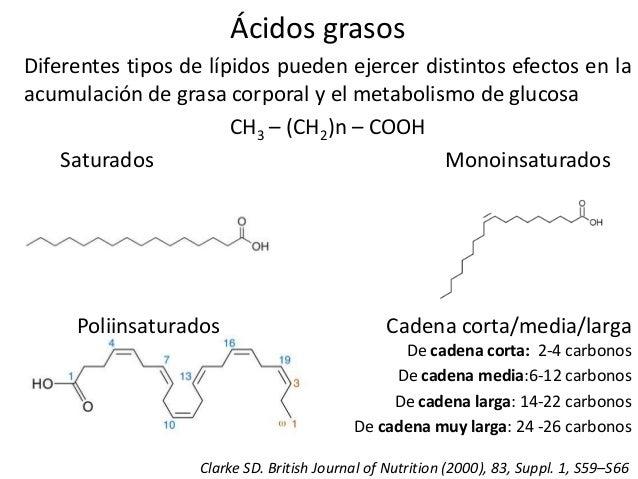 Los Acidos Grasos ácidos Grasos Diferentes Tipos