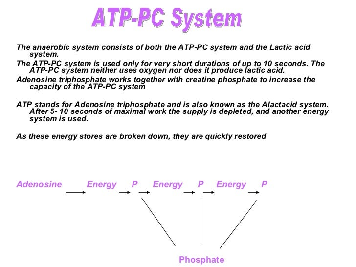 energy systems atp ce lactic acid Glycolysis/lactic acid anaerobic energy systems energy is produced using this system when the atp-cp system cannot produce energy any more this system uses glucose stored in the muscles and liver to produce.