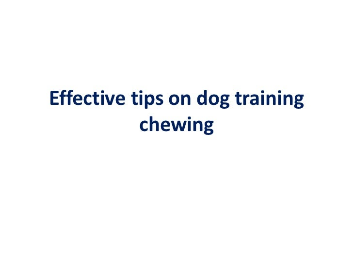 Effective Tips On Dog Training Chewing