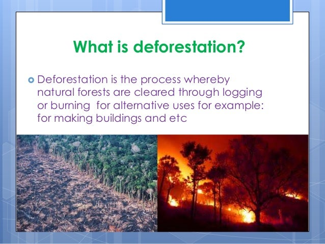effects deforestation essays Essay on deforestation clearing of trees, better known as the problem of deforestation, intensifies the greenhouse effect (which greatly contributes to global warming), significantly alters the water cycle, heightens the rate of soil erosion (which may eventually lead to soil runoff and floods), and assists in extreme loss of biodiversity.