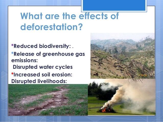 Deforestation - Sample Essays
