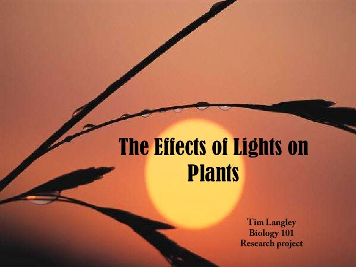 The Effects of Lights on Plants<br />Tim Langley<br />Biology 101<br />Research project<br />