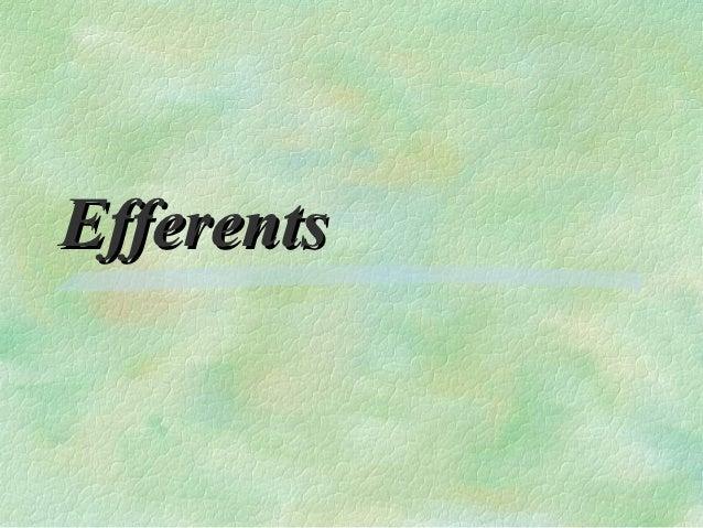 Efferents