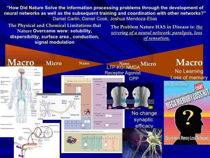 """"""" How Did Nature Solve the information processing problems through the development of neural networks as well as the subse..."""