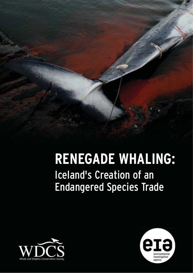 RENEGADE WHALING:Icelands Creation of anEndangered Species Trade