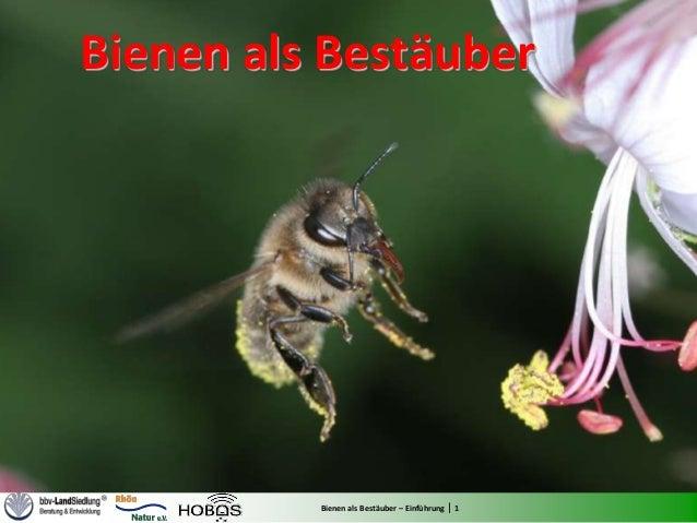 Bienen als Bestäuber          Bienen als Bestäuber – Einführung | 1