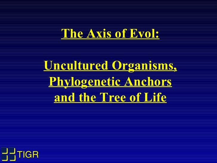 The Axis of Evol:       Uncultured Organisms,        Phylogenetic Anchors         and the Tree of LifeTIGR