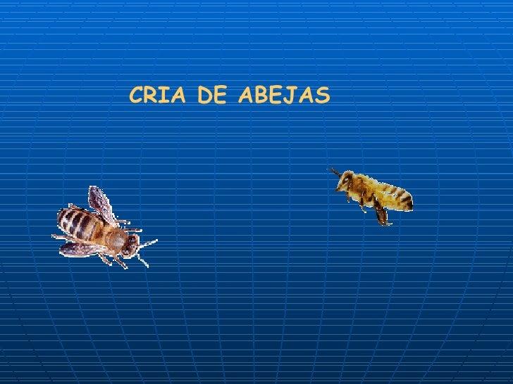 CRIA DE ABEJAS