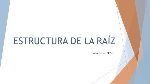 ESTRUCTURA DE LA RAÍZ Sofía Ferrer BCS1