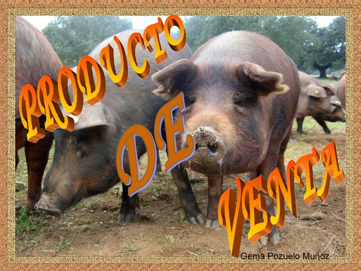 VENTA PRODUCTO DE Gema Pozuelo Muñoz
