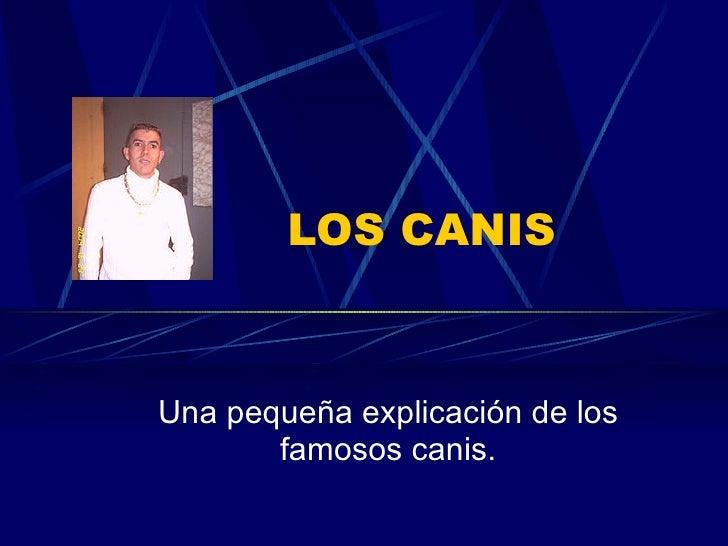 LOS CANIS Una pequeña explicación de los famosos canis.