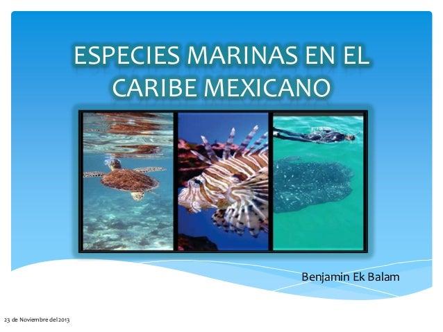 ESPECIES MARINAS EN EL CARIBE MEXICANO  Benjamin Ek Balam  23 de Noviembre del 2013