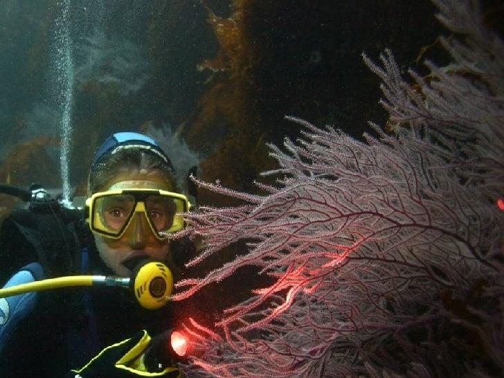 El buceo recreativo como herramienta de conservación y divulgación de los valores naturales