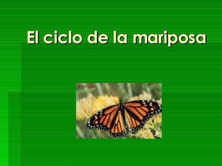 El ciclo de la mariposa