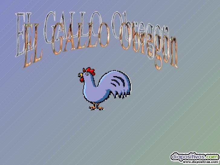El  Gallo  Obregon Www[1]