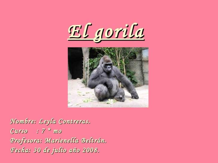 El gorila Nombre: Leyla Contreras. Curso  : 7 * mo Profesora: Marienella Beltrán. Fecha: 30 de julio año 2008.