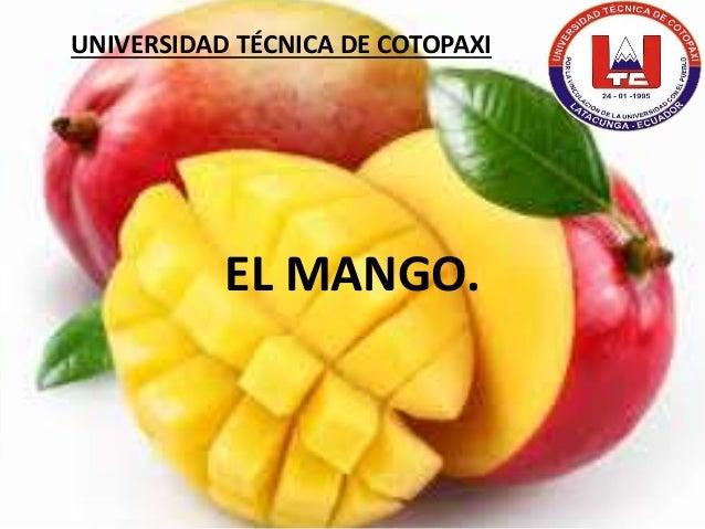 EL MANGO. UNIVERSIDAD TÉCNICA DE COTOPAXI