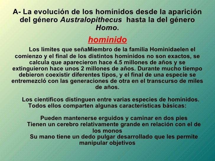 A- La evolución de los homínidos desde la aparición del género  Australopithecus   hasta la del género  Homo . hominido Lo...
