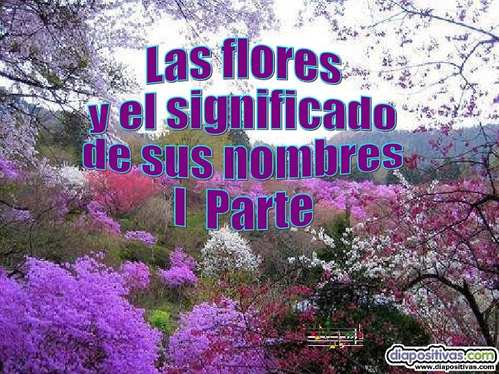 El significado de las flores diapositivas pps matias - Significado de las rosas rosas ...