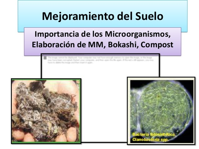 Mejoramiento del Suelo Importancia de los Microorganismos,Elaboración de MM, Bokashi, Compost