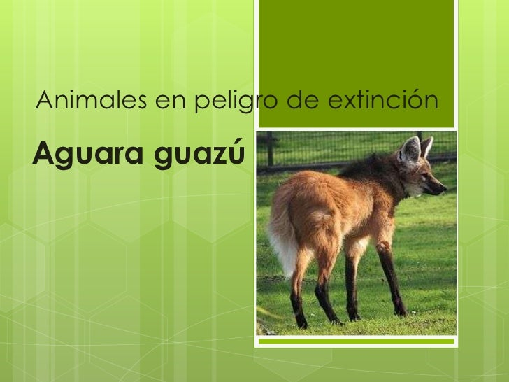 Animales en peligro de extinciónAguara guazú