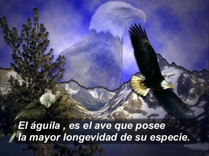 El Aguila