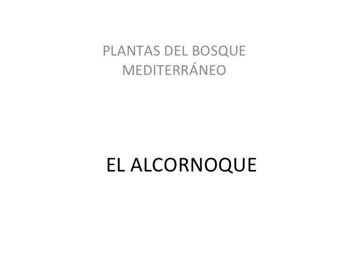 EL ALCORNOQUE PLANTAS DEL BOSQUE MEDITERRÁNEO