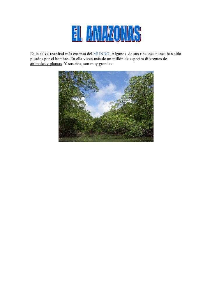 Es la selva tropical más extensa del MUNDO. Algunos de sus rincones nunca han sido pisados por el hombre. En ella viven má...