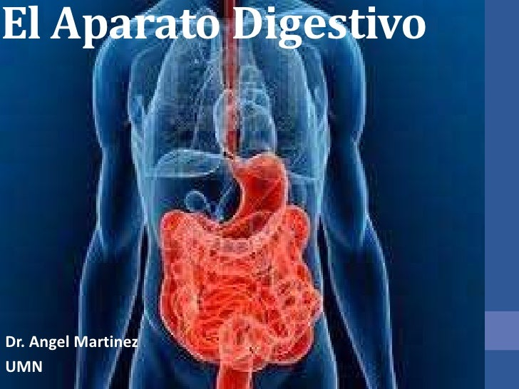 El Aparato Digestivo<br />Dr. Angel Martinez<br />UMN<br />