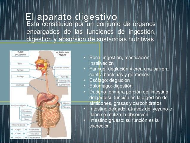 Esta constituido por un conjunto de órganos encargados de las funciones de ingestión, digestion y absorsion de sustancias ...