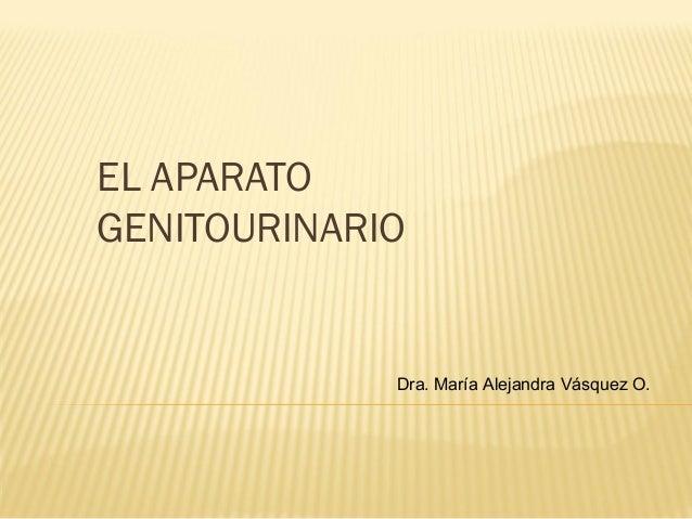 EL APARATO GENITOURINARIO  Dra. María Alejandra Vásquez O.