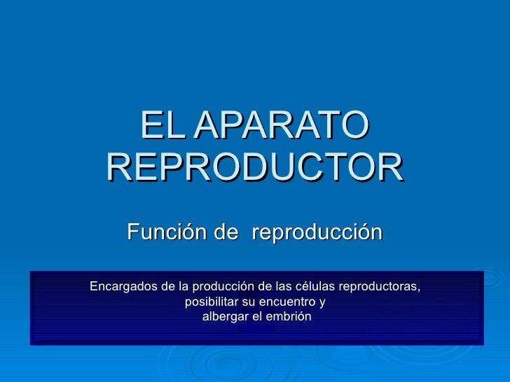 EL APARATO REPRODUCTOR Función de  reproducción Encargados de la producción de las células reproductoras,  posibilitar su ...