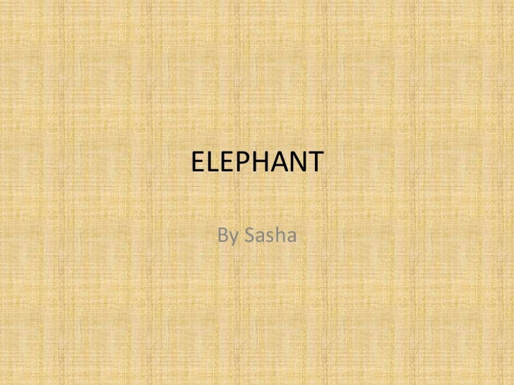 ELEPHANT<br />By Sasha<br />
